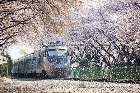Фотодневник. Свадебный поезд.
